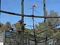 Ibis rouge (2363957170).jpg