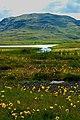 Iceland - panoramio (19).jpg