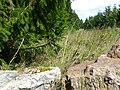Idarwald - bei Stipshausen - panoramio (4).jpg