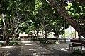 Iglesia Santo Domingo.SC Tenerife.05. Plaza..JPG