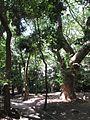 Ikuta Shrine - panoramio (26).jpg