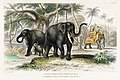 Illustration from A History of the Earth and Animated Nature by Oliver Goldsmith from rawpixel's own original edition of the publication 00024.jpg