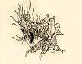 Ilustración Organum.jpg