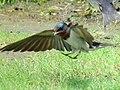 In the Air (8715153893).jpg
