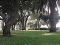 In the Shade of an Eucalyptus Tree.jpg