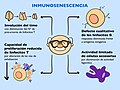 Inmunosenescencia.jpg