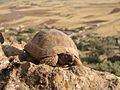 Iran - Chaharmahal Va Bakhtiyari - Khanmirza - panoramio.jpg