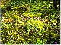 January Frost Botanic Garden Freiburg alpinum - Master Botany Photography 2014 - panoramio (3).jpg