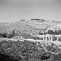 Jeruzalem Gezicht op de Gethsemanekerk (Kerk van alle Naties) en de Olijfberg …, Bestanddeelnr 255-1653.jpg