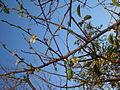 Jesenski cvat šljive.jpg