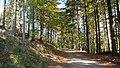 Jesień na Przysłopie - panoramio.jpg