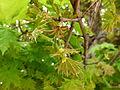 Jeunes pousses de printemps - Jardin des Plantes 2.JPG