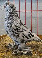 List of pigeon breeds - Wikipedia
