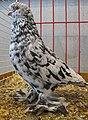 Jielbeaumadier pigeon romagnol agr paris 2013.jpeg