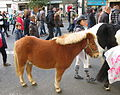 Jielbeaumadier poney paris 2013.jpeg