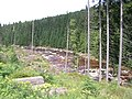 Jizera, mezi Kořenovem a Jizerkou.jpg