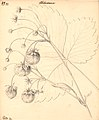 Jordbær - Abundance (9244515421).jpg