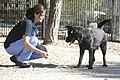 Jornada de puertas abiertas en el Centro de Protección Animal del Ayuntamiento 05.jpg