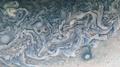 Jupiter - PJ24-24 - Detail - Flickr - Kevin M. Gill.png