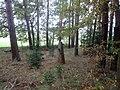 Kříž východně od Zahorčiček v lesíku (Q80459073).jpg