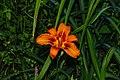 Kalimpong Flora and Fauna11.jpg