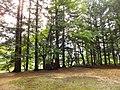 Kamishiro, Hakuba, Kitaazumi District, Nagano Prefecture 399-9211, Japan - panoramio (12).jpg