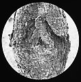 Kanker , Bestanddeelnr 194-0182.jpg
