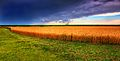 Kansas Summer Wheat and Storm Panorama.jpg