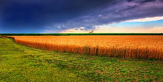 Wheat production in the United States - Kansas Summer Wheat and storm panorama