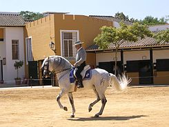 Kartäuser-Pferd Andalucia, Spain Private Tour - June 2007.jpg