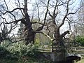 Kastanjebomen ingang Kasteel Schouwbroek in Lovendegem.jpg