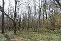 Kemp's Wood (2) - geograph.org.uk - 1252009.jpg