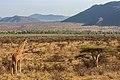 Kenya, Safari (46066984262).jpg
