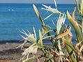 Keros beach 4.jpg