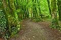 Killarney Park Forest Trail - HDR (10430459544).jpg