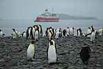 King Penguins and the M S Expedition (5724587282).jpg