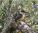 Kingfisher 1 (31683182350).jpg