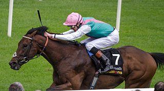 Kingman (British horse) British-bred Thoroughbred racehorse