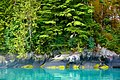 Kitlope milky blue waters.jpg