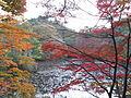 Kobe Municipal Arboretum in 2013-11-16 No,16.JPG