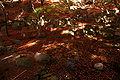Kobe Suma Rikyu Park06s4592.jpg