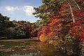 Kobe municipal forest botanical garden16s3872.jpg