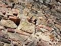 Kreuzschnabei , Männchen mit rotem Bauch - panoramio.jpg