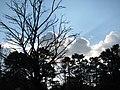 LIGHTS - panoramio - Behrooz Rezvani.jpg