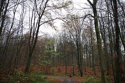 LSG HM 00026 Hessisch Oldendorfer Wesertal Nord - zwischen Pötzen und dem Süntelturm (4).jpg