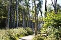 LSG Kühlung - Nienhäger Holz (Gespensterwald) (134).jpg