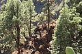 La Palma - Puntagorda - El Roque - Barranco del Roque (Mirador Barranco del Roque) 02 ies.jpg