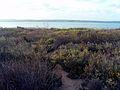 LagunadelaMataRingPlants.jpg