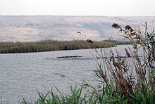 Lake Agmon Hula Valley.JPG