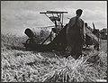 Landbouw, graan, oogsten, Bestanddeelnr 049-0165.jpg